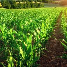 Agriculture : rupture ou accompagnement du changement ? Notre dernier rapport